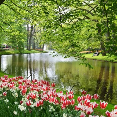Holandia Keukenhof