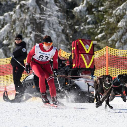 Love and Rivalry - Sled Dog Racing