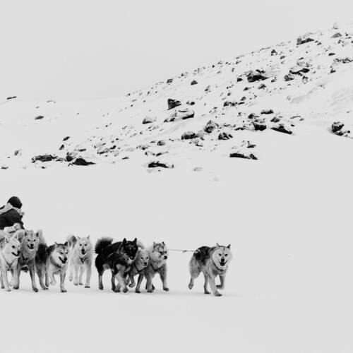 Greenland - monochrome